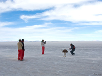 view--patting emu Salar de Uyuni, Potosi Department, Bolivia, South America