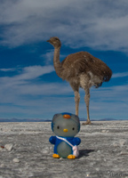 view--penguin hello kitty and emu Salar de Uyuni, Potosi Department, Bolivia, South America