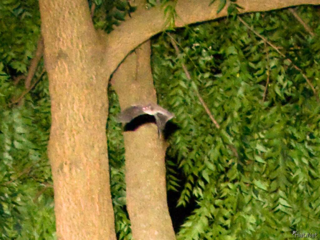 Fruit Bat Ecosia