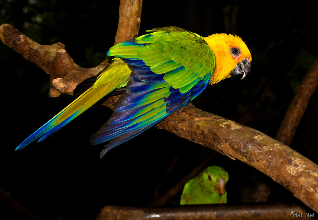 view--colorful parakeet