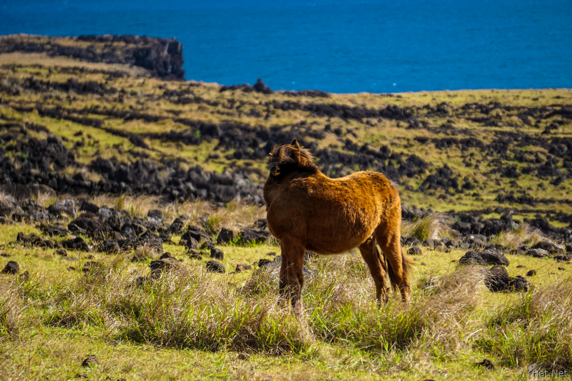 Wild horses of Easter Island Self Pity