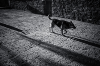 20150928084439_Lonely_Dog