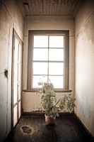 20151007105027_Santa_Laura_Indoor_plant