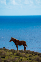 20150909170719_Potrait_of_a_Wild_horse