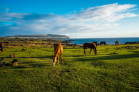 20150909192712_Wild_horses_of_Easter_Island_Feeding